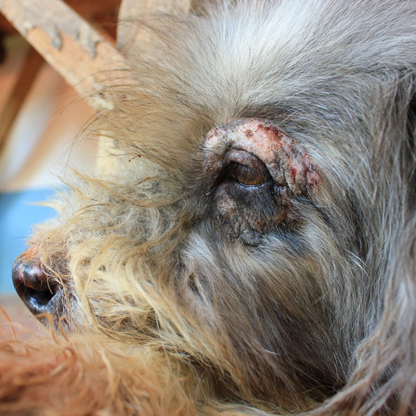 What Causes Hair Loss In Dogs