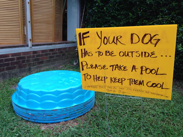 Kiddie pools for dogs to play in during the summer.