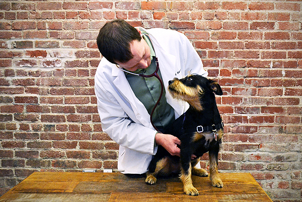 Dr. Eric Barchas and a puppy patient (Photo by Liz Acosta)
