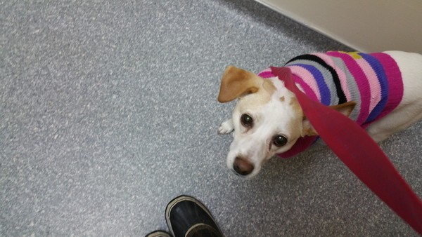 Finding a mobile vet was good for Marshmallow, who is still working on her confidence and doesn't love going to the animal hospital.