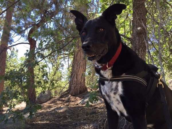 My darling old man looking happy on a hike. (Photo by Wendy Newell)