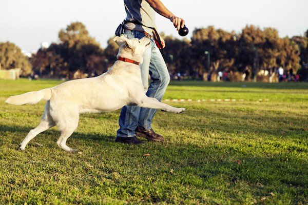 Man and dog playing fetch by Shutterstock.
