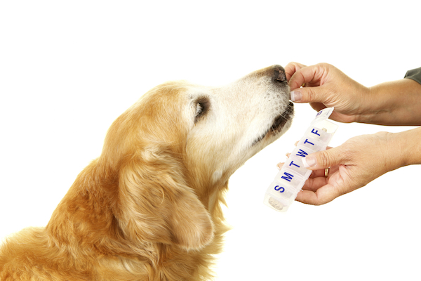 Dog getting medication by Shutterstock.