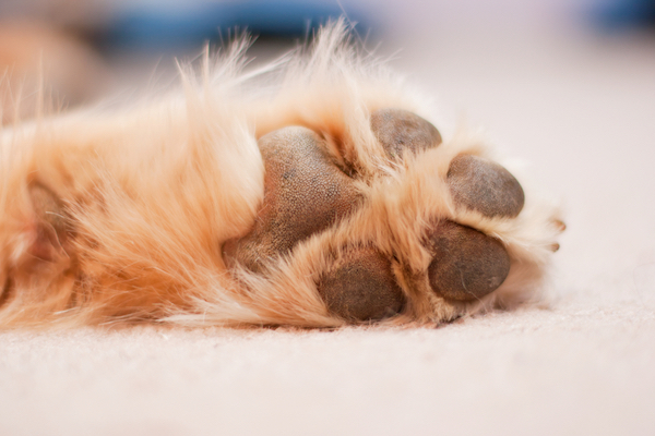 Dog paw by Shutterstock.