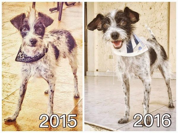 Emmett has gained a best friend, a home and a few pounds since his adoption in 2015. (All photos courtesy @soyemmett)