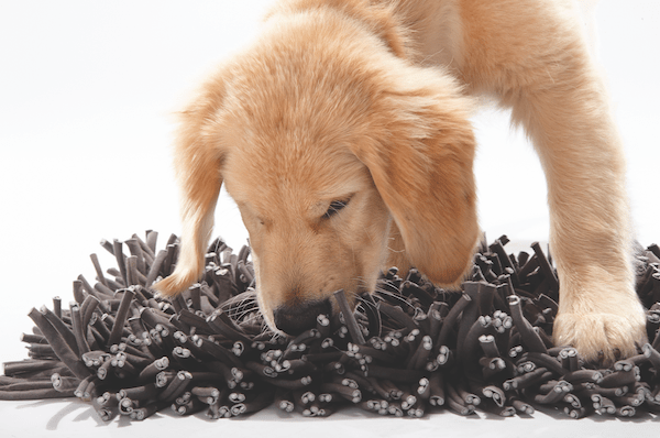 Start out with a simple food puzzle toy like the Wooly Snuffle Mat from Paw5. Hide kibble or treats in the mat, your dog will then sniff around to find the food, and you have instant success no matter if your dog is young, old, has arthritis, or is blind.