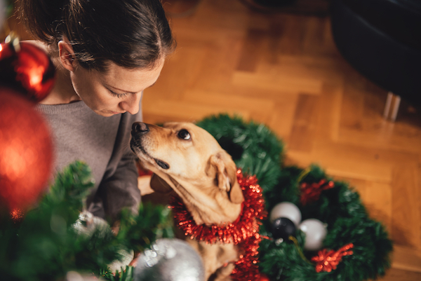 Woman, dog and Christmas tree by Shutterstock.