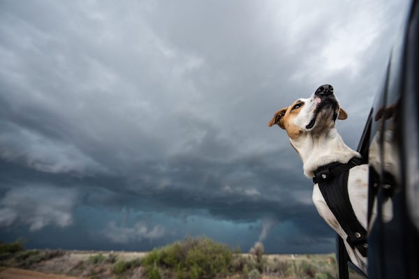 Joplin helps her human, Mike Mezul, with his stormchasing and serves as his photographic muse. (Photo by Mike Mezul)