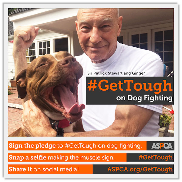 Patrick Stewart and his foster dog, Ginger, are part of the ASPCA's #GetTough campaign. (Photo courtesy ASPCA)