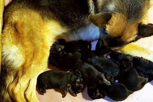 Rumor and her pups.