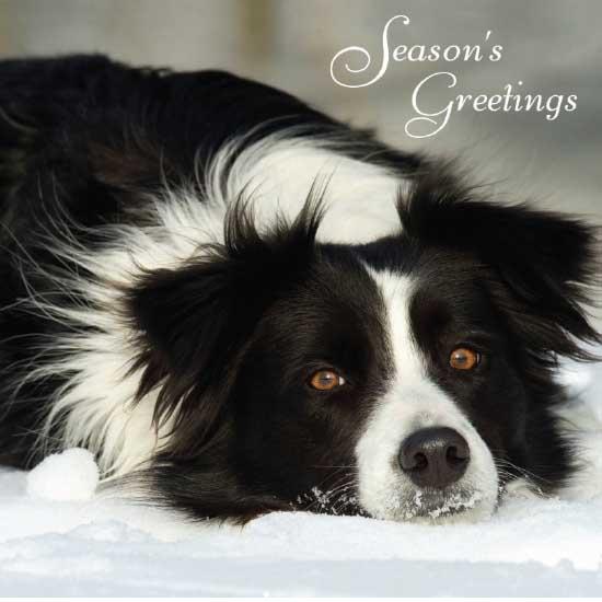 Christmas Cards Greetings Online Halloween XYZ