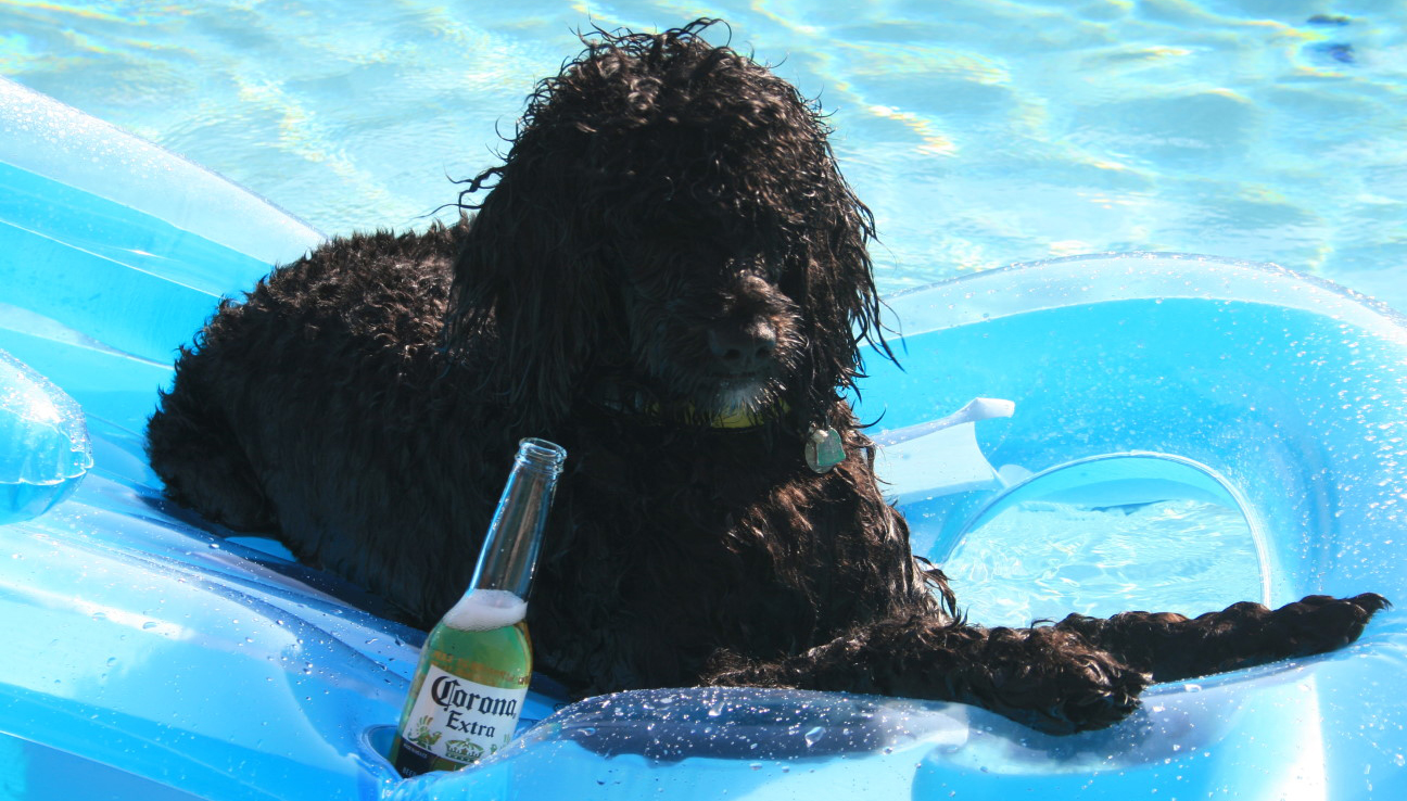Image result for dog with beer