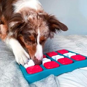 Top 5 des jeux d'intelligence et d'occupation pour chiens.