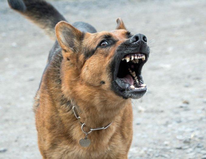 Agressivité chez le chien.