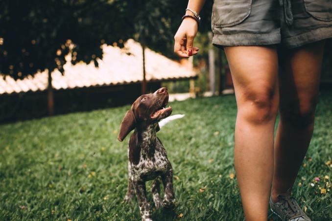 Profiter d'un caniparc avec son chien