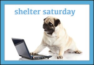 shelter-saturday