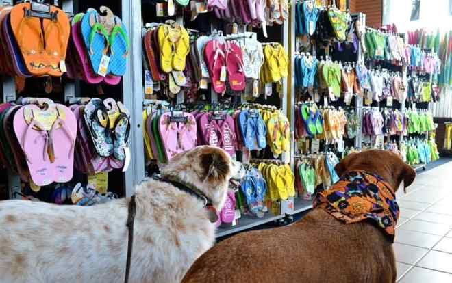 dog-friendly shopping