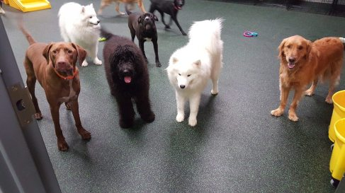 It's playtime at Dogtopia!