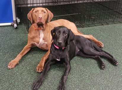 Best of friends at Dogtopia of North Austin