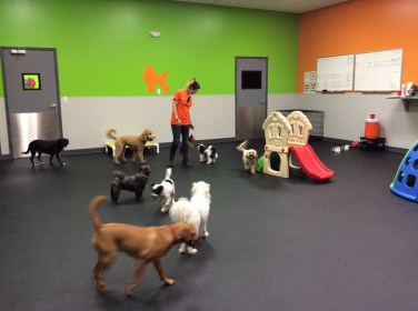 Making friends at Dogtopia