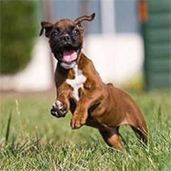 Puppy Mattie