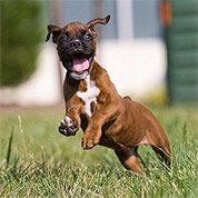 Puppy Mathilda plays in grass