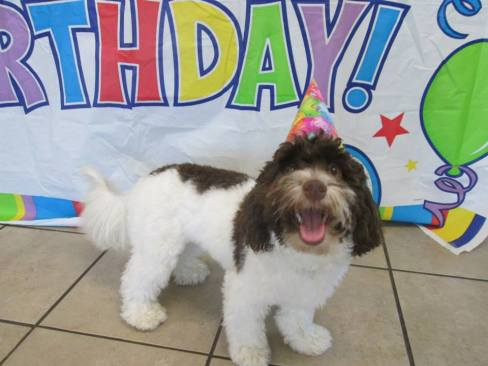 CJ Havanese, Monthly Birthday Party