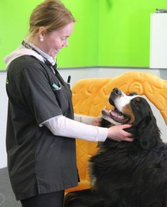 Daycare dog, Hudson, receiving lots of love from Playroom Attendant, Pia.