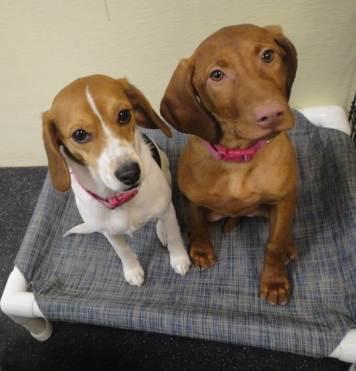 Schoepp Motors West >> Dog Boarding, Spa, Daycare Middleton | Dogtopia Madison West