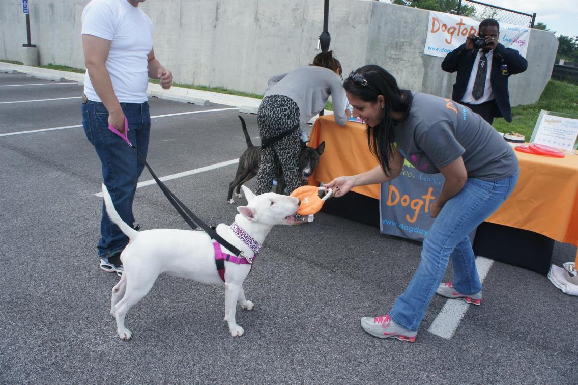 `Charity dog wash event