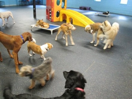 Dogs playing time at Dogtopia