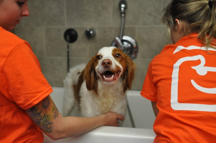 Dog grooming spa services north raleigh dogtopia north raleigh one of our four legged clients enjoying a bath solutioingenieria Image collections