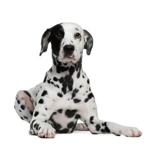 Dog sit homepage