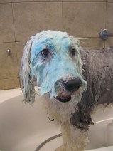 Dog grooming spa services omaha dogtopia omaha boo berry facial solutioingenieria Choice Image