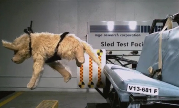 Crash Test Doggies!?