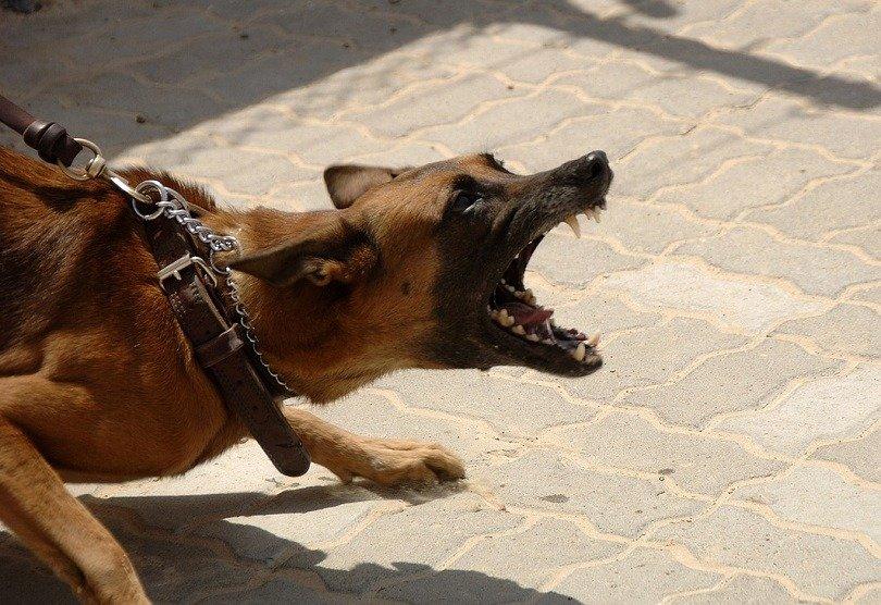 stop barking dog