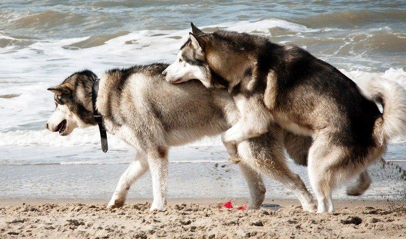 stop dog humping