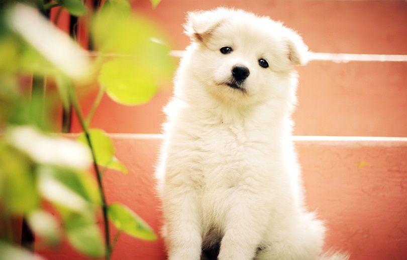 dog stares