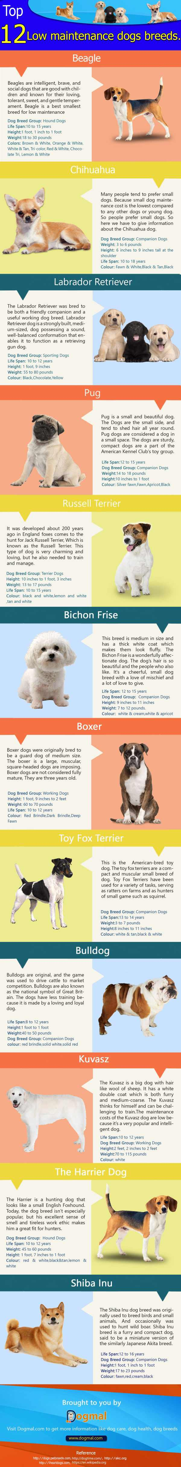 low-maintenance-dog-breeds
