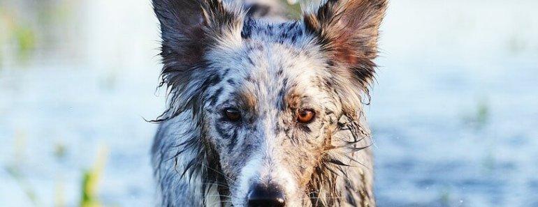 dog wash machine