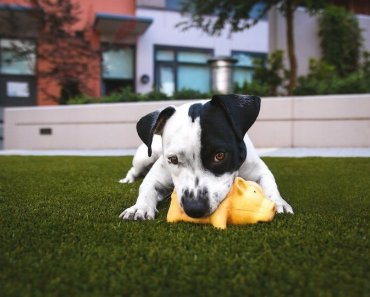 puppy chew treats