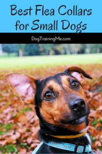 best flea collars for small dogs