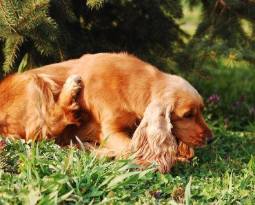 dog allergies itchy skin