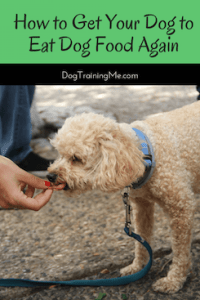 how to get your dog to eat dog food again
