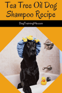 tea tree oil dog shampoo recipe