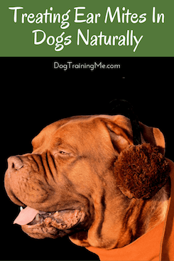 Treating Ear Mites In Dogs Naturally