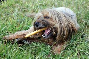products for bad dog breath