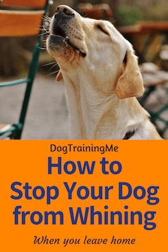 stop your dog from whining
