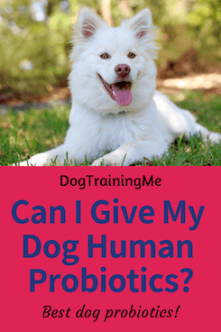 give dogs human probiotics