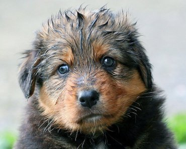 good smelling puppy shampoo